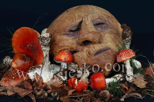 Bonos e malos-funghi di Barbagia